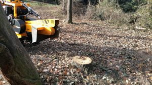 Essex tree stump grinding removing oak stumps