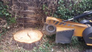 Essex tree stump grinding in Shalford Essex