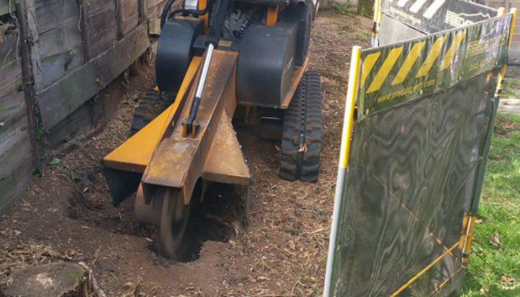 Tree stump grinding a Leylandii hedge near Braintree For more details call Essex Tree Stump Grinding on 07971 648879  ...
