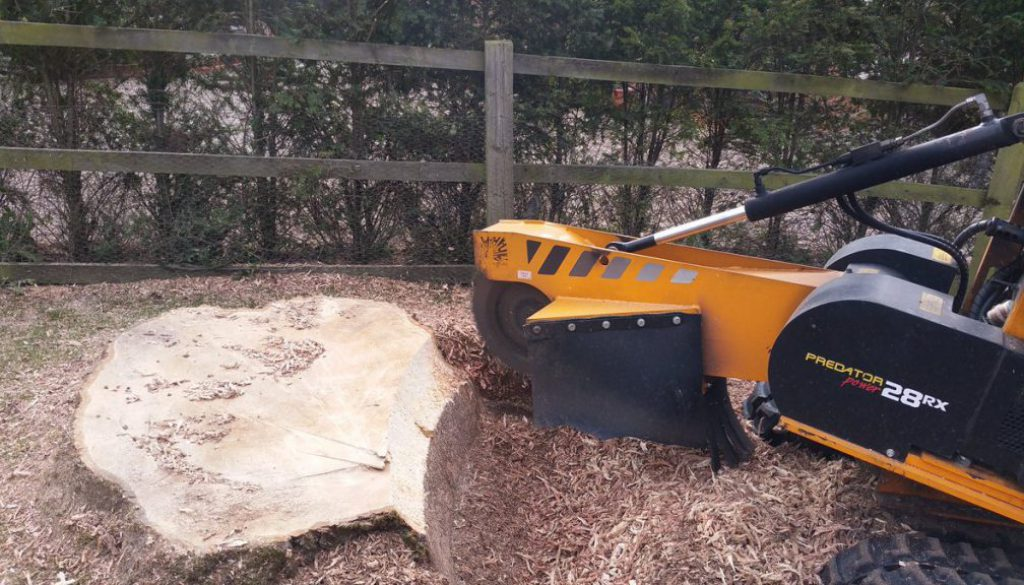 Tree stump grinding a large ash tree stump at Ugley, Essex. Call Roy at  on 07971 648879 or visit  ...