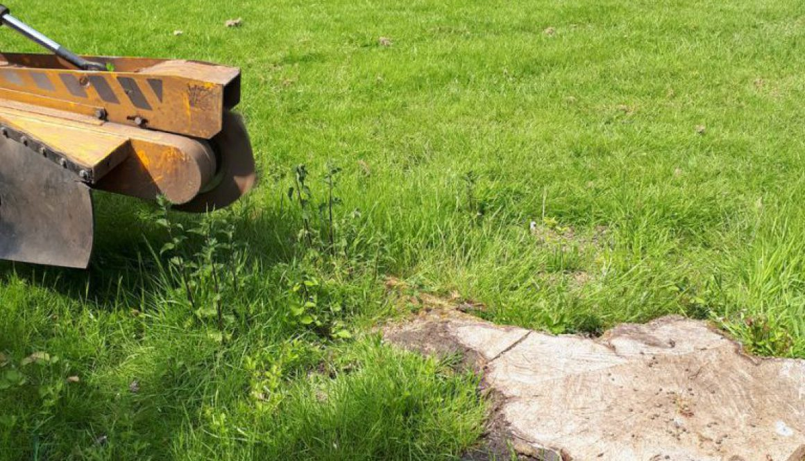 Essex Tree Stump Grinding are grinding out various tree stumps at Stock, near Billericay, Essex. ...
