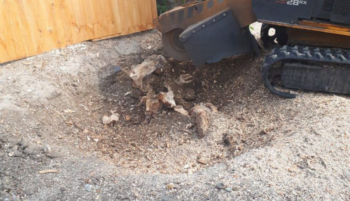 Half way through removing the field maple tree stump in Braintree, Essex. It is often cheaper for me to grind your tree ...