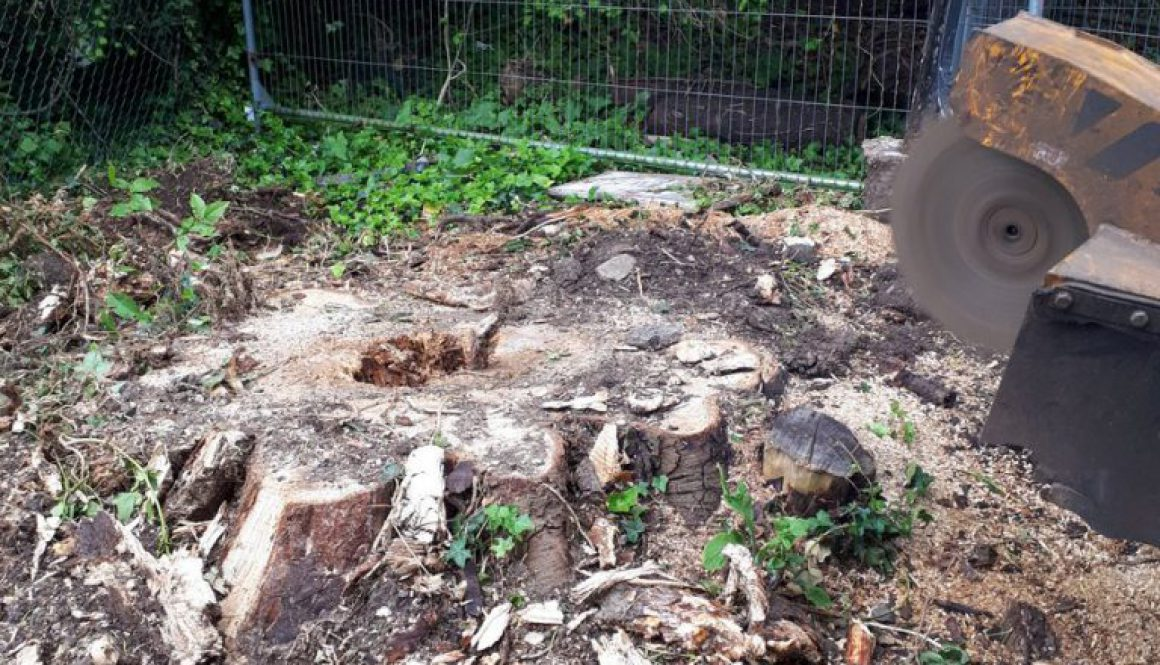 Tree stump grinding a large horse chestnut stump in preparation for a new driveway. Using a radio remote stump grinder i...