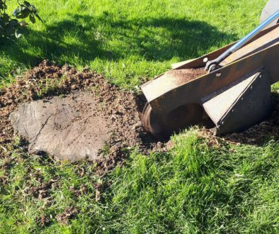 Tree stump grinding and removal of tree stumps, near Great Dunmow, Essex. For a free no obligation quote, please call Ro...