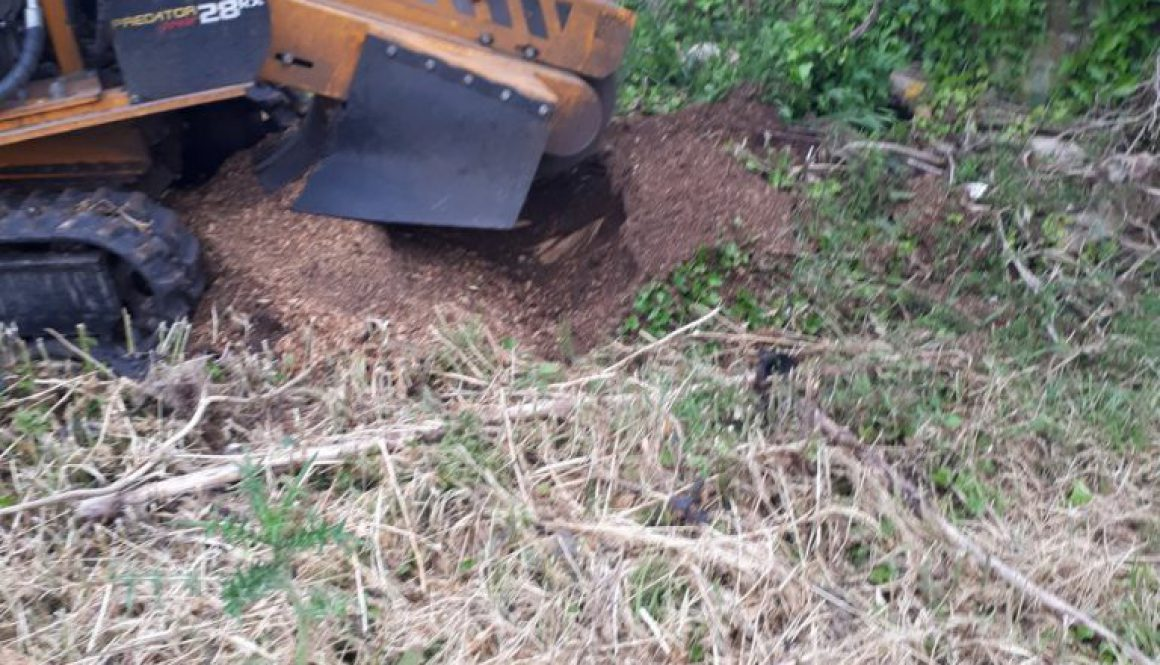 Tree stump grinding mainly elm stumps in Bassingbourn, Cambridgeshire today. Getting to the root of your stump removal p...
