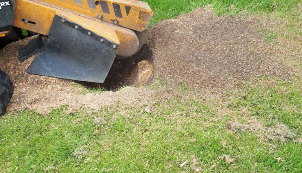 Removing a tree stump in Romford, Essex. Essex Tree Stump Grinding is here to help you with all your tree stump removals...