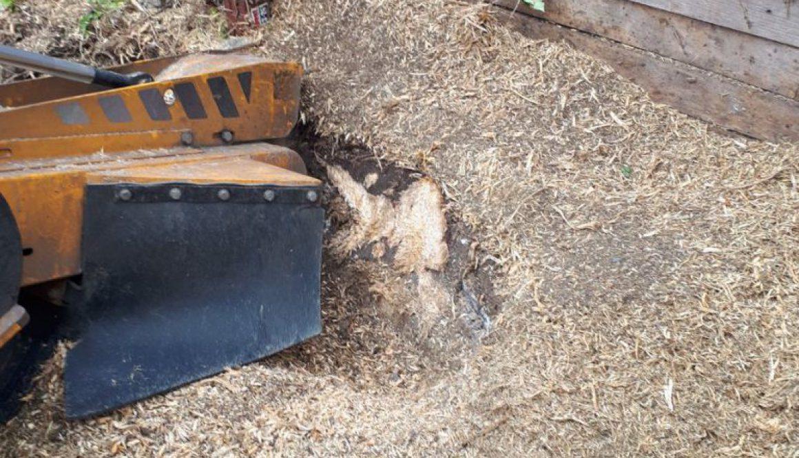 Stump grinding in Ashdon, Near Saffron Walden, Essex. For more information please visit our website at  ...