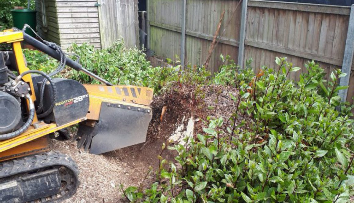 Tree stump grinding a large bay tree stump at Stebbing, near Dunmow, Essex, from start to finish! Please call me for all...