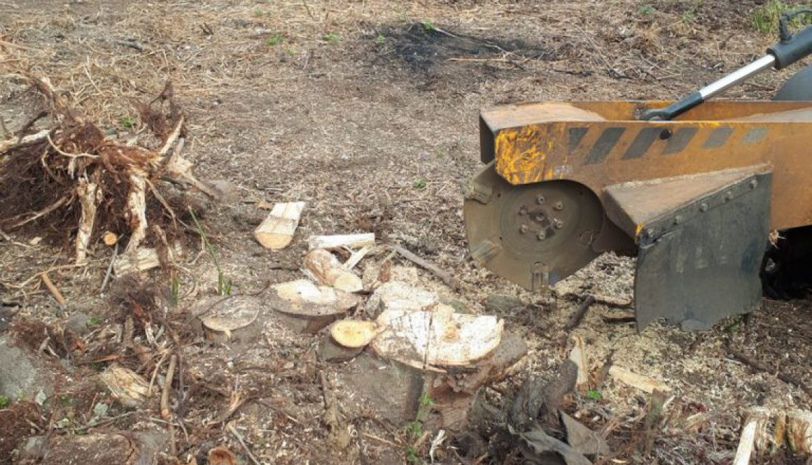 Tree stump grinding a multiple stemmed ash tree, near Harlow, Essex. From start to finish. Please feel free to contact m...