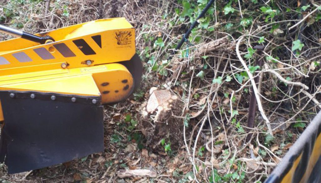 Essex tree stump grinding various types of tree roots and tree stumps in Worley Warley, near Brentwood, Essex. We are re...