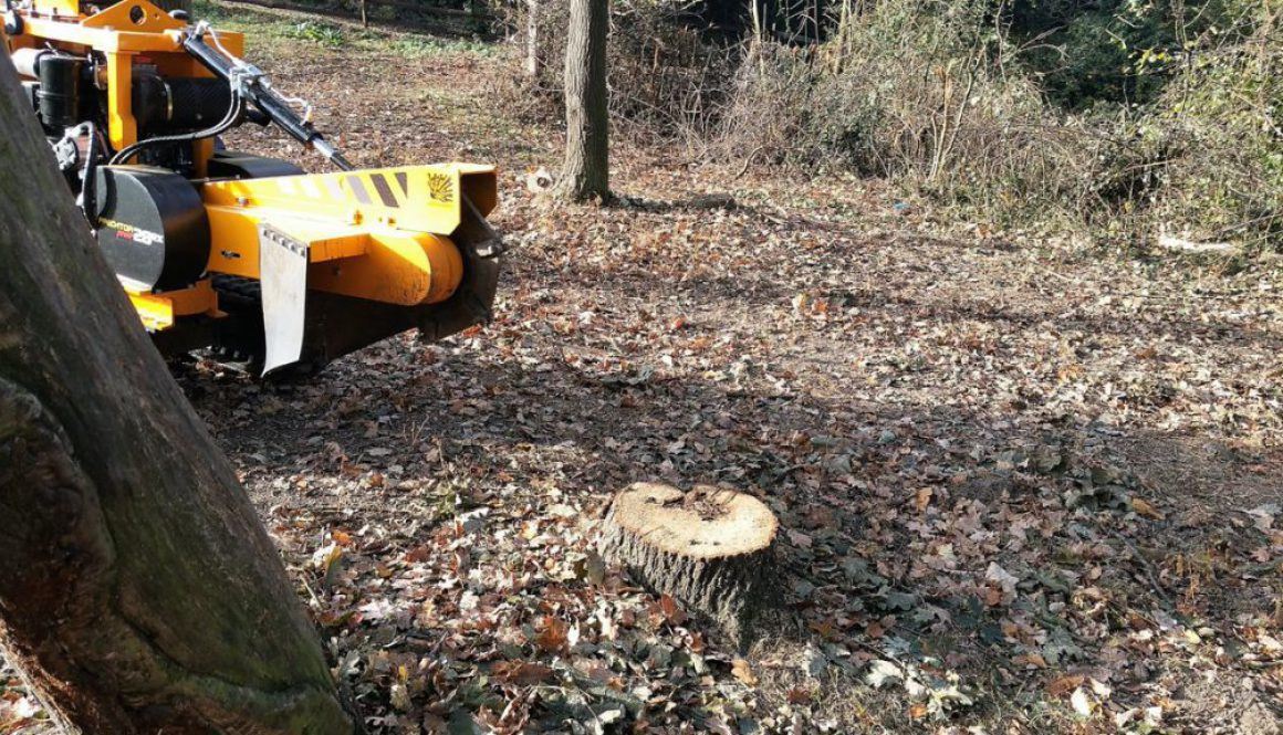 L| Did you know that it is often cheaper to hire me and my stump grinder to remove your tree stumps rather than hiring a...