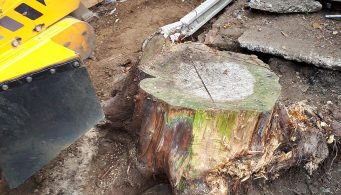 Grinding out tree stumps at Ealing, West London. We are here to help with all your stump grinding needs. ...