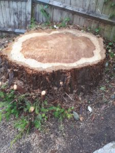 Can you kill a tree stump with poison?