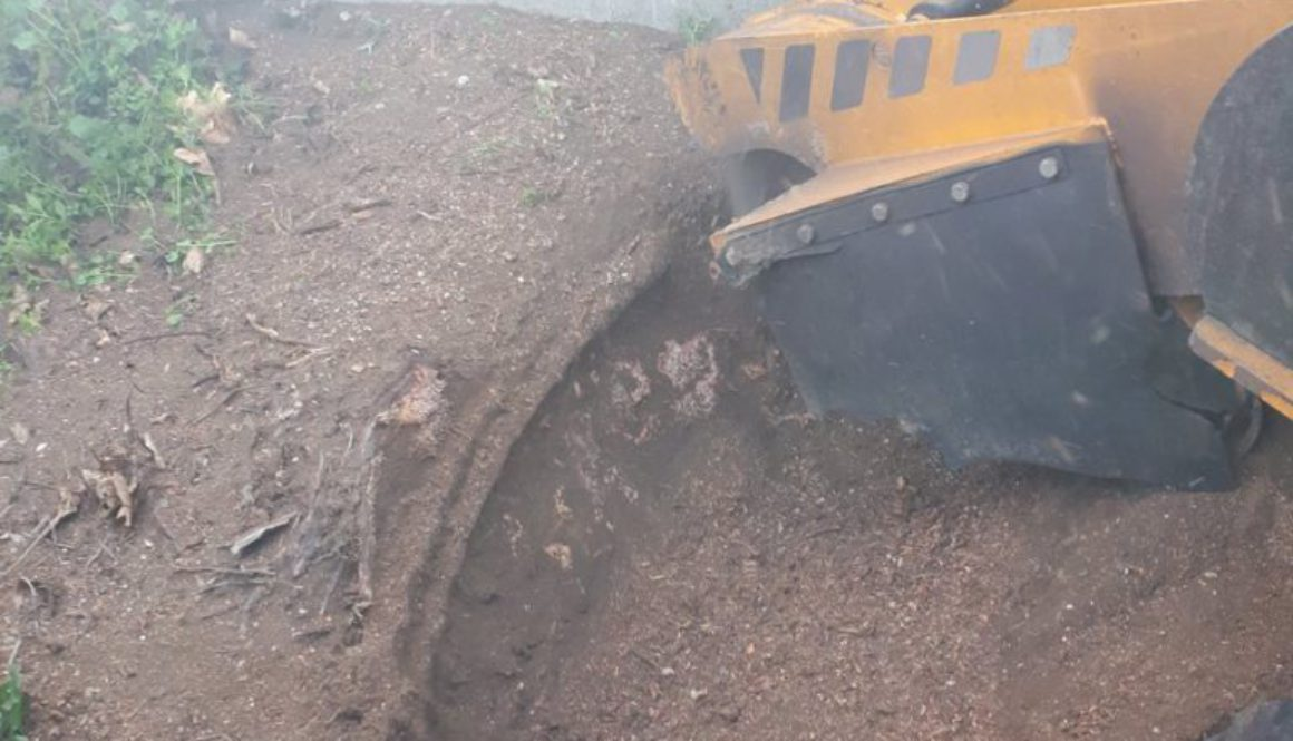 Essex Tree Stump Grinding out a yew tree root in Great Dunmow, Essex. We are here to help you with all your tree stump r...