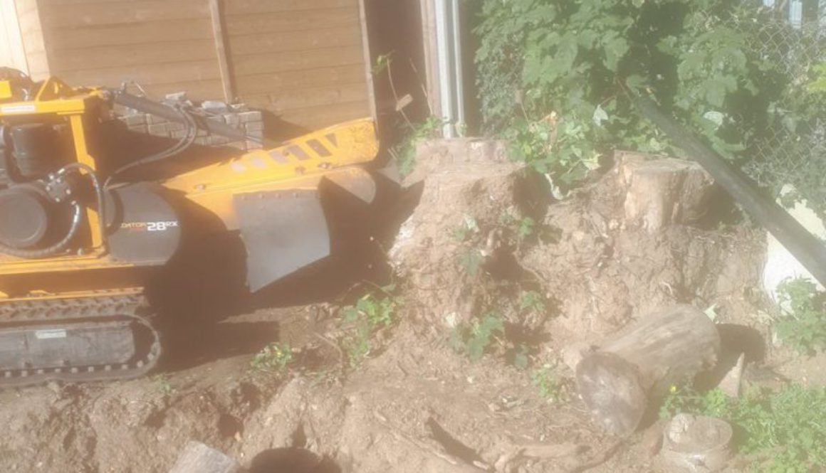 Essex Tree Stump Grinding removing a large sycamore stump near Bury St Edmunds, Suffolk. Please give me a call for a fre...