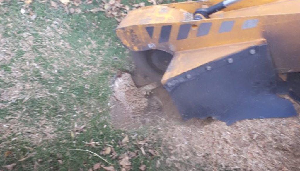 Essex Tree stump grinding stumps at Great Saling, near Stebbing, Dunmow, Essex. We are here to help you with all your tr...