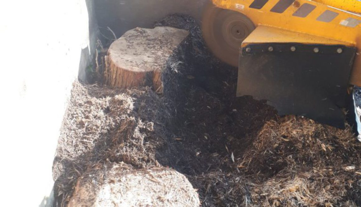 Essex tree stump grinding removing and grinding tree stumps near Gidea Park, Essex. We are here for all your tree stump ...