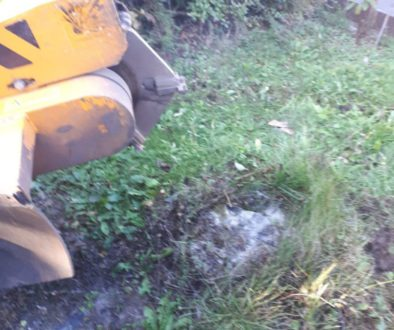 Essex tree stump grinding stumps in Saffron Walden, Essex. We are here for all your tree stump removal needs! Call 07971...