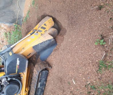 Essex Tree Stump Grinding removing tree stumps in Purleigh, Essex.