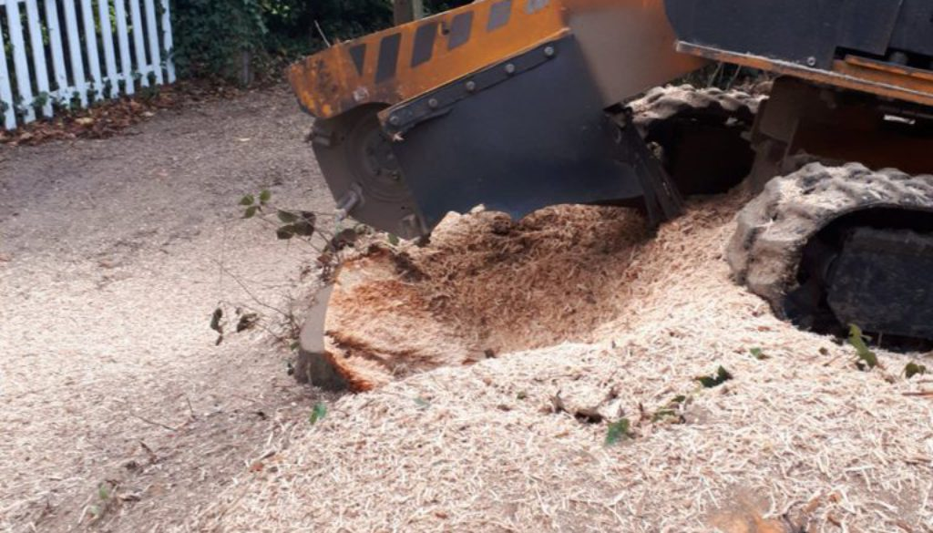 Essex tree stump grinding removing a large sycamore tree stump near Stansted, Essex. For a free instant no obligation qu...