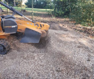 Removing tree stumps near Tillingham, Essex. I had several large tree stumps to grind out on this particular job. ...