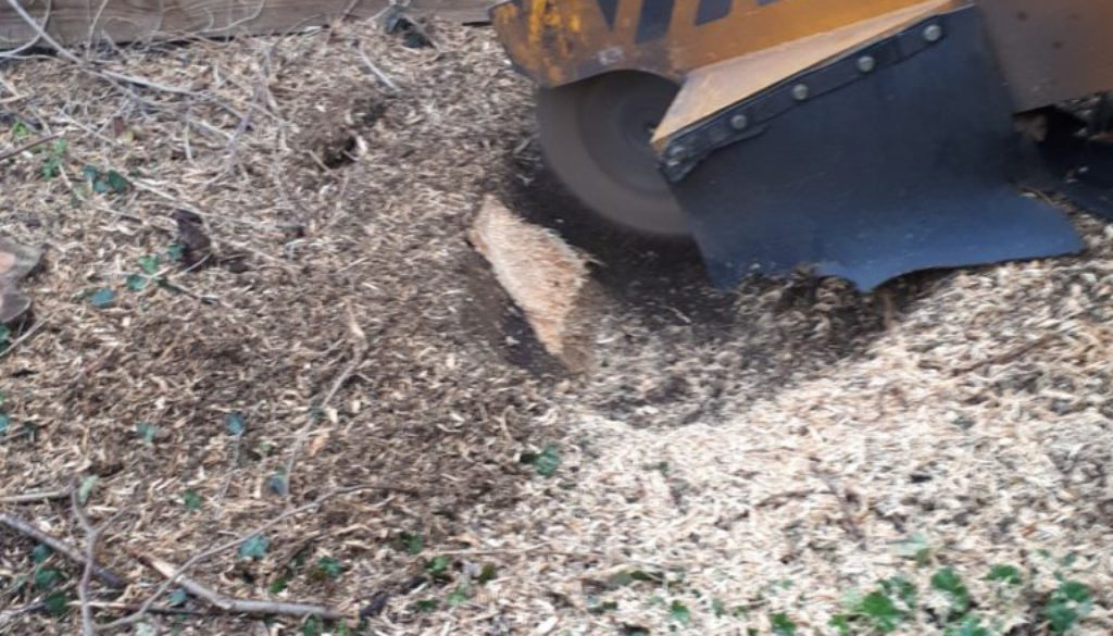 Grinding tree stumps near Long Melford, Sudbury, Suffolk. Please give me a call for all your stump grinding needs. (0797...