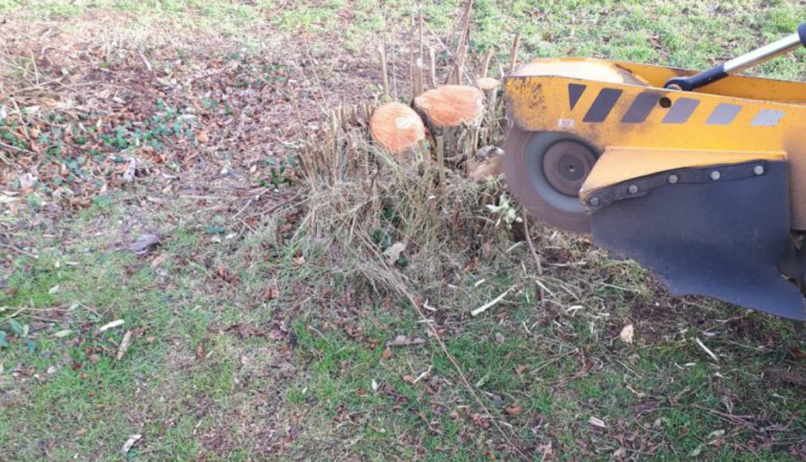 Essex Tree Stump Grinding removing more tree stumps near Sudbury, Suffolk. We are here for all your stump grinding needs...