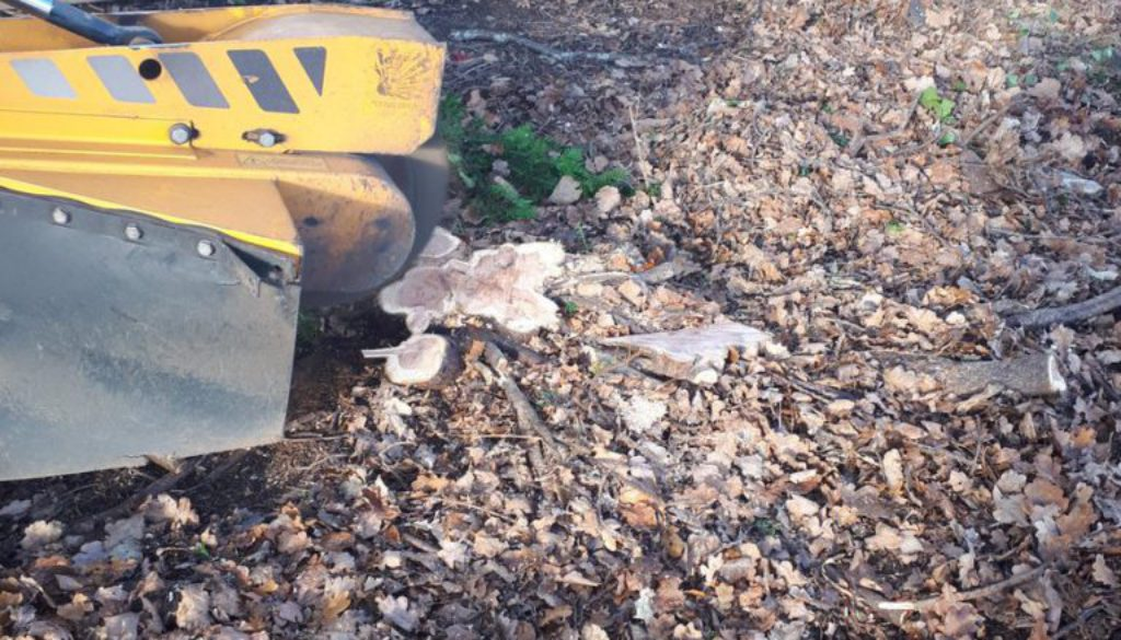 Essex Tree Stump Grinding removing tree stumps near Billericay, Essex. This site was being cleaned in preparation for a ...