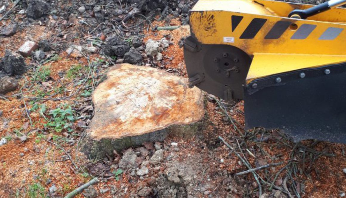 Grinding out a cherry tree stump near Much Hadham, Bishop's Stortford, in preparation for the landscapers to lay turf. ...