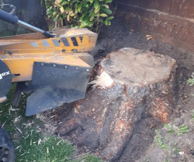 Removing a large conifer tree stump near Danbury, Chelmsford, Essex. We are here to help you with all your tree stump gr...