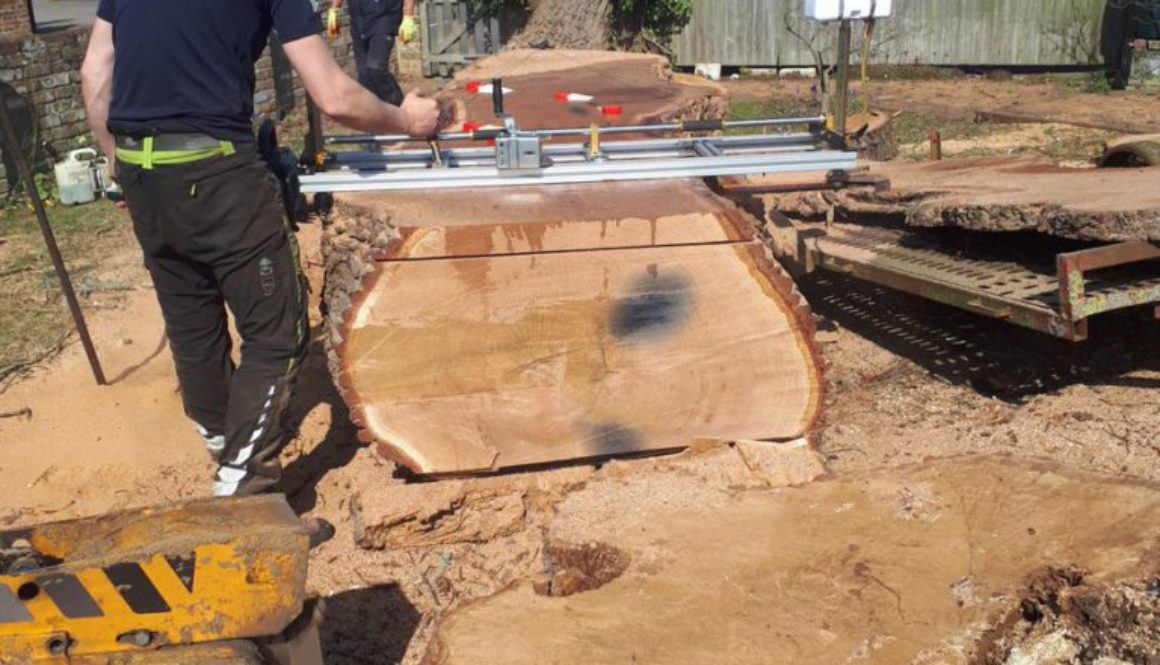 Tree stump grinding a large oak tree stump near Shalford, Essex. Unfortunately, this oak tree was rotten and unsafe. #tr...