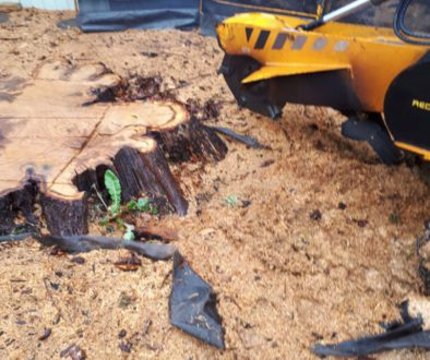 Essex tree stump grinding a large oak tree stump in Hutton, Brentwood, Essex. Although oak is an extremely hardwood, it ...