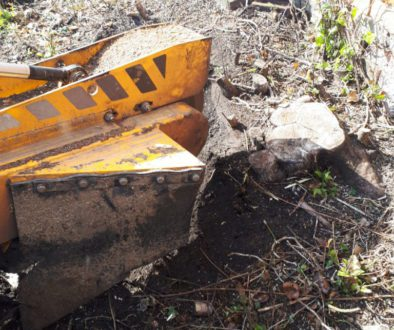 Essex tree stump grinding removing conifer various stumps in Wethersfield, Essex. We are here to help you remove your un...