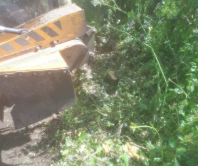 Essex tree stump grinding removing various tree stumps near Wimbish, near saffron Walden, Essex. We are here to help you...