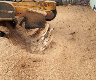 More photographs of Essex tree stump grinding a large oak tree stump in Hutton, near Brentwood, Essex. This particular t...