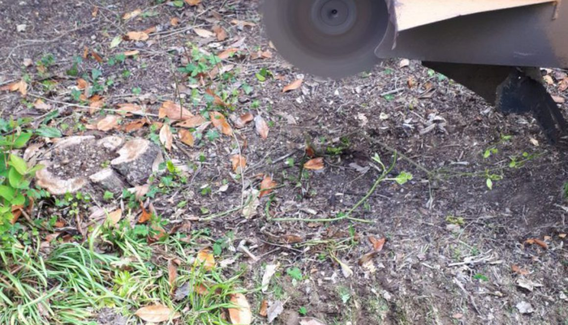 Removing a selection of various small tree stumps near High Roding, Dunmow, Essex. We are here for all your tree stump r...