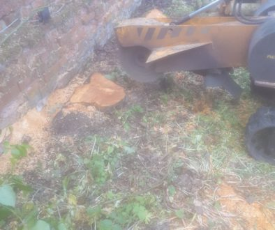 Stump grinding out various fruit tree stumps near Castle Camps, Hellions Bumpstead, Essex. We are here to get to the roo...