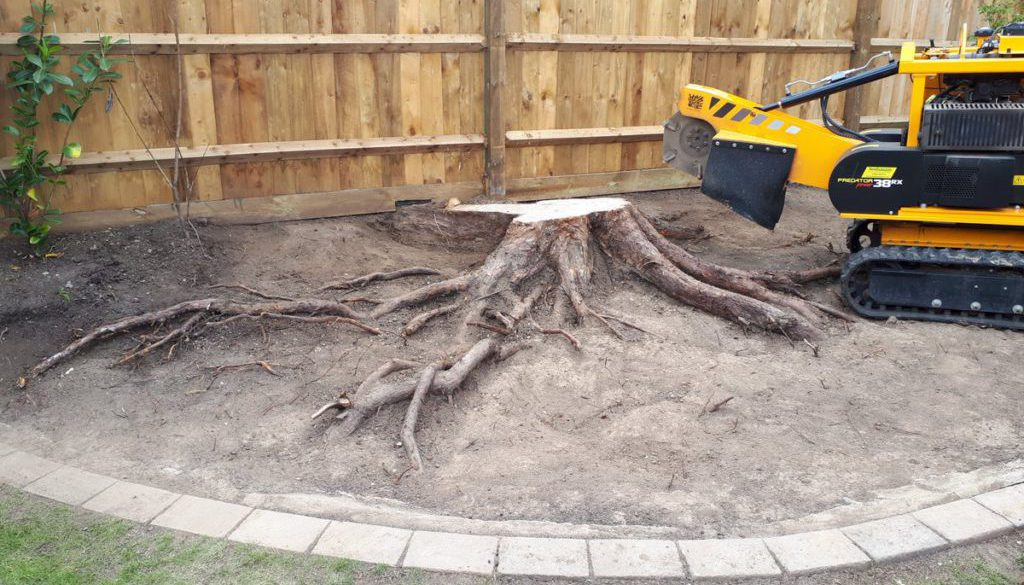 Tree stump grinding near Sawbridgeworth, Hertfordshire. This particular conifer stump has the roots exposed, the custome...