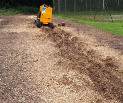 Essex Tree Stump Grinding lelandii stumps near Gestingthorpe, Sudbury. #treestumpgrinding #treestumpremovals ...