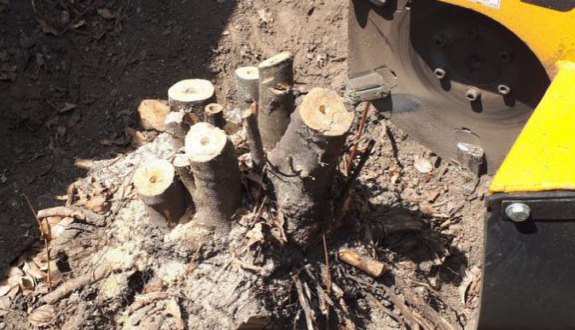 Essex Tree Stump Grinding removing tree stumps at Billericay, Chelmsford, Essex. #treestumpgrinding #treestumpremovals #...