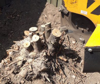 Essex Tree Stump Grinding removing tree stumps at Billericay, Chelmsford, Essex. #treestumpgrinding #treestumpremovals #...