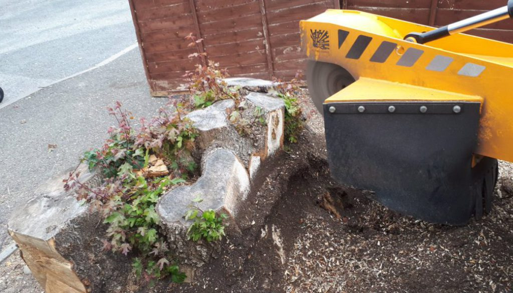 Removing a couple of large field maple tree stumps near Teversham, Cambridge. These tree stumps were removed to make way...