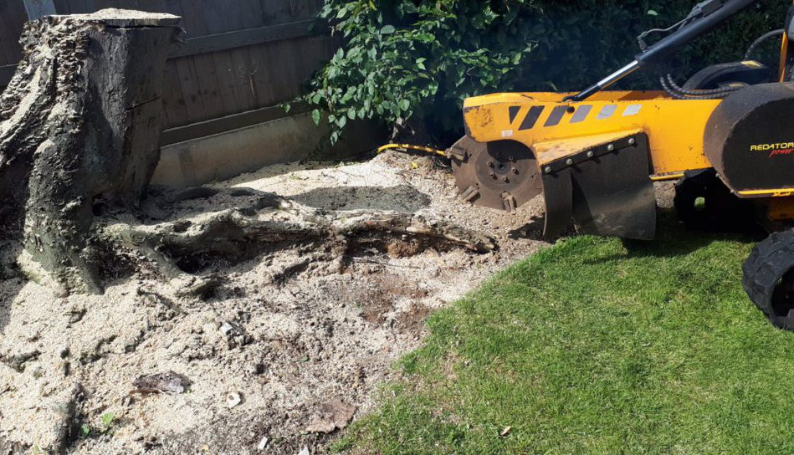 Grinding a very large hornbeam tree stump in Great Baddow, Chelmsford, Essex. We are here to help you with all your tree...