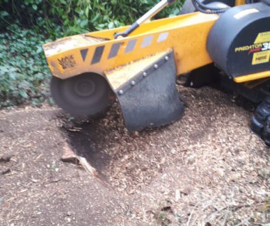 Tree stump grinding at Tilty, Dunmow, Essex. We are here for all your tree stump removal needs. #TreeStumpGrinding #Esse...
