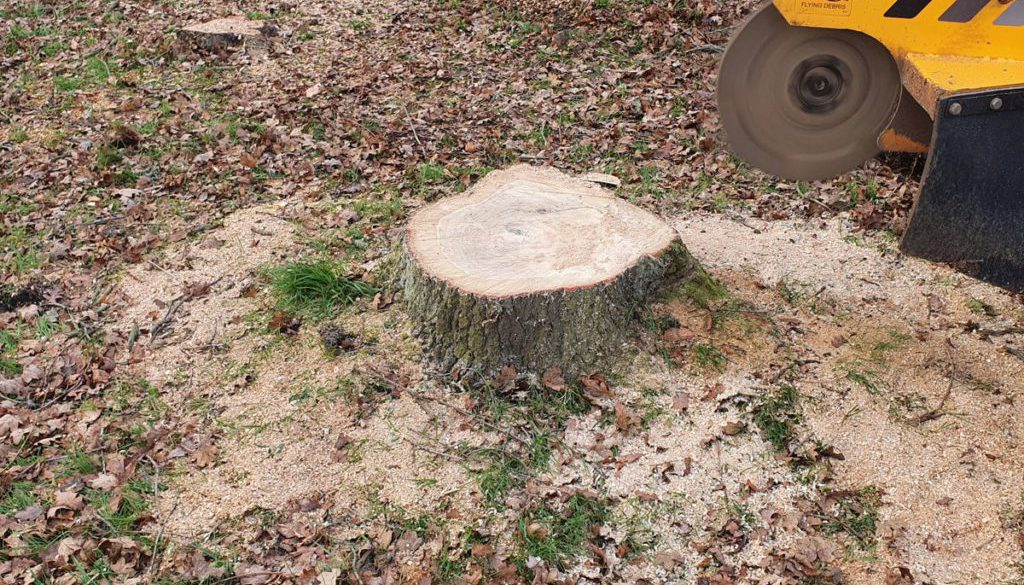 Grinding various tree stumps today at Ramsden Heath, near Billericay, Essex. Tree stumps range from oaks to fruit tree s...