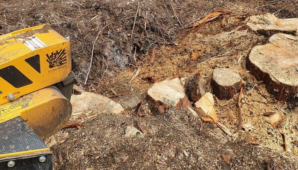 Removing a large Cedar tree stump, near Gosfield, Hedingham, Essex.