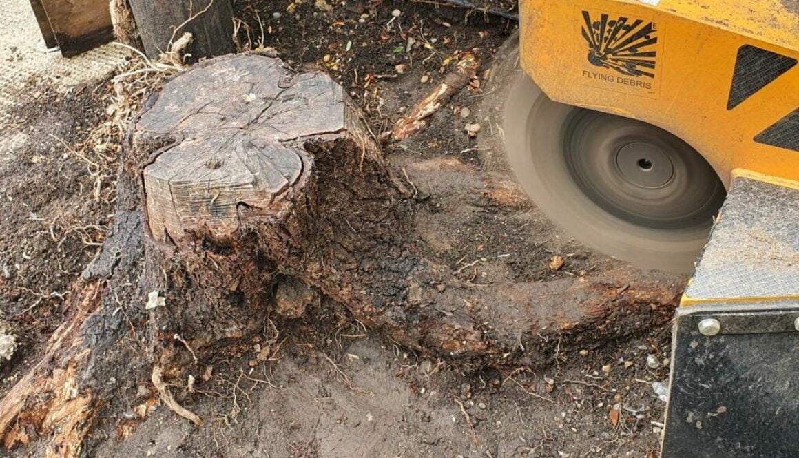 Removing an old tree stump in preparation for a new