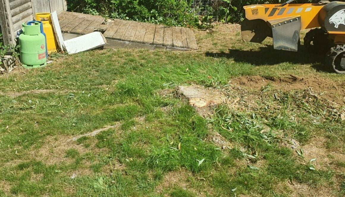 Removing various tree stumps in Great Dunmow, Essex. New ornamental trees will be planted to replace the old trees. We a…