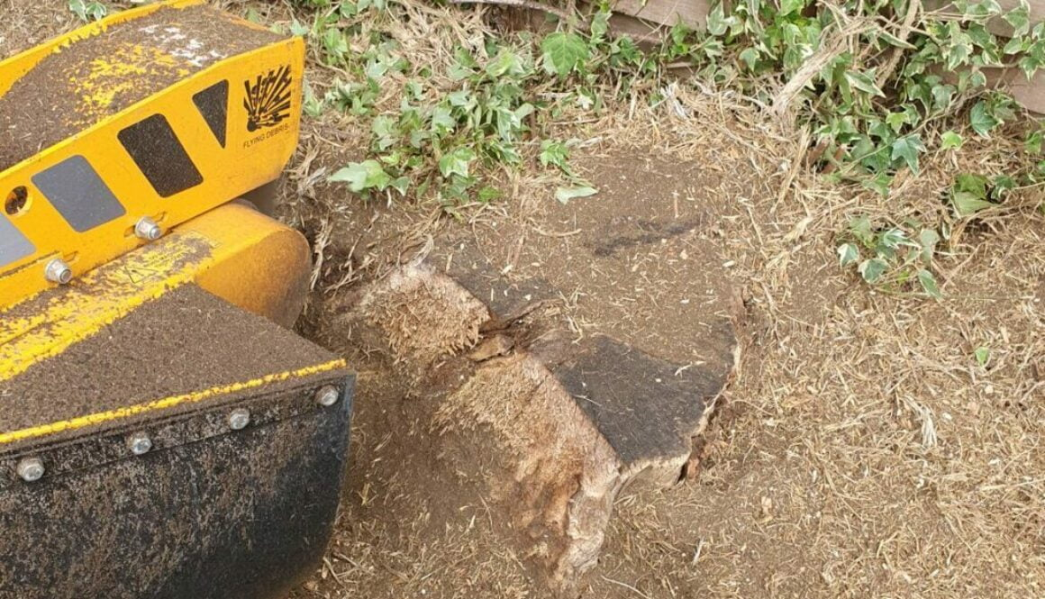 Tree stump grinding a large ash tree stump in the rain today in Bishops Stortford. It's nice when the customer leaves a ...