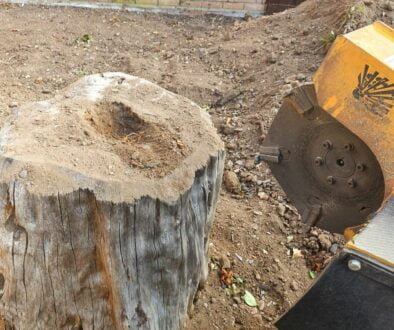 Another tree stump grinding job in Great Baddow, near Chelmsford, Essex. This was another total garden landscaping proje…